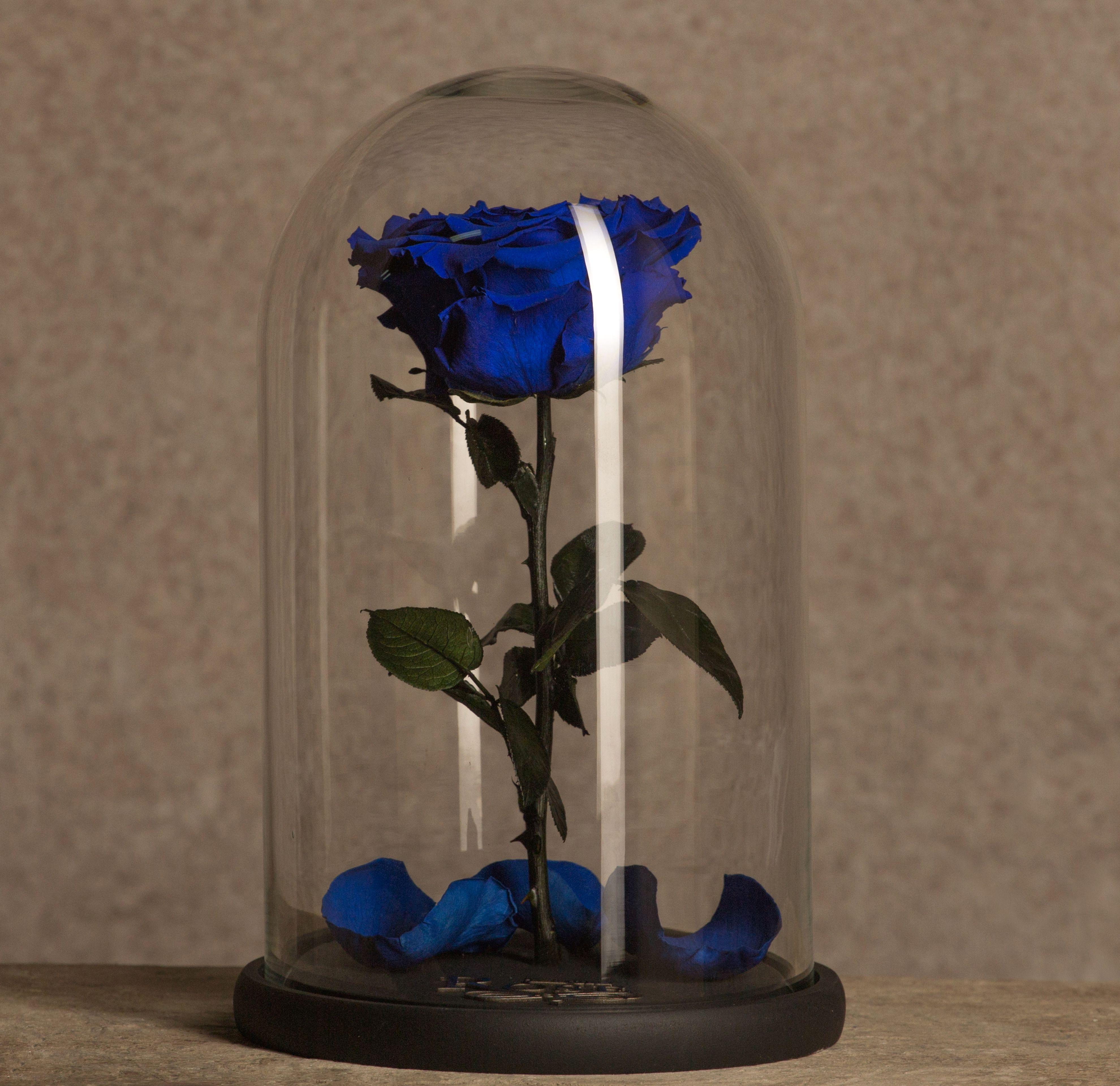 Кариоптерис, цветок в капсуле купить в москве
